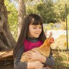 Buff Orpington Chicken and Girl