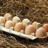 Buff Brahma Eggs
